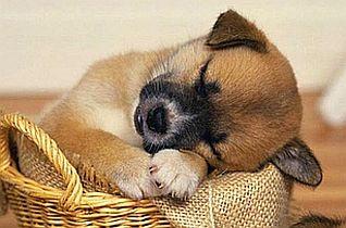 sleep puppy